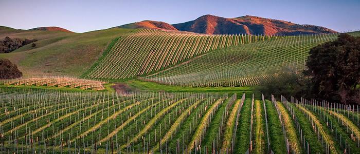 peake ranch winery vineyards